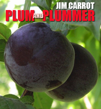 Plum and Plummer - A film about the sticky business of growing plum trees.